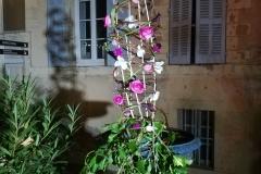 Fleurs de the reves